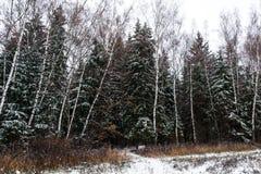 Ландшафт зимы, идет снег смешанный лес Стоковые Изображения