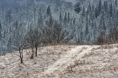 Ландшафт зимы контраста Стоковое фото RF