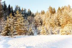 Ландшафт зимы края древесины в солнечном свете Стоковые Изображения
