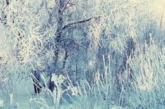 Ландшафт зимы морозных ветвей дерева зимы в лесе зимы в холодной солнечной погоде Стоковое фото RF