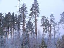 Ландшафт зимы на пасмурный морозный день Стоковая Фотография RF