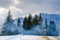 Ландшафт зимы, приюченный спрус зеленого цвета: Формат, рождественская елка стоковая фотография rf