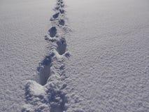 Ландшафт зимы пути Стоковое Изображение RF