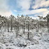 Ландшафт зимы рано утром Стоковое Изображение RF