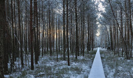 Ландшафт зимы рано утром Стоковое Изображение
