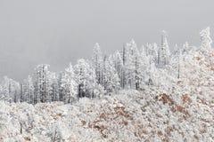 Ландшафт зимы снега скалистых гор Колорадо, который замерли Стоковое Изображение RF