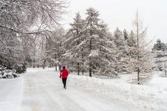 Ландшафт зимы снежный в Монреале стоковое фото rf