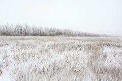 Ландшафт зимы снежный Стоковые Изображения RF