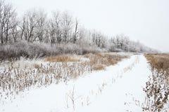 Ландшафт зимы снежный Стоковое Фото