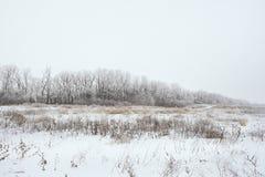 Ландшафт зимы снежный Стоковая Фотография RF