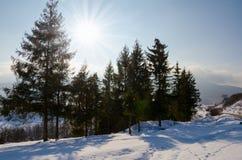 Ландшафт зимы, спрус зеленого цвета приютил формат, рождественскую елку стоковая фотография rf