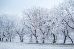 Ландшафт зимы - строка деревьев в заморозке стоковое изображение