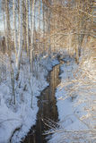 Ландшафт зимы с березами Стоковое Изображение RF