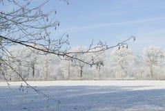 Ландшафт зимы с изморозью Стоковая Фотография RF