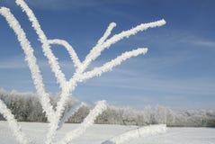 Ландшафт зимы с изморозью Стоковые Изображения