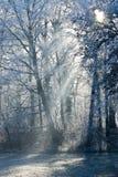 Ландшафт зимы с изморозью Стоковое фото RF