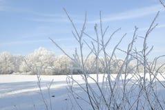 Ландшафт зимы с изморозью Стоковые Фотографии RF
