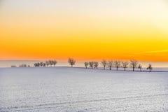 Ландшафт зимы с переулком дерева в заходе солнца Стоковое Изображение