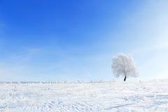 Ландшафт зимы с сиротливым полем дерева и снега Стоковая Фотография RF