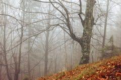 Ландшафт зимы туманного леса Стоковые Фотографии RF
