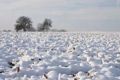 Ландшафт зимы - 01 Стоковая Фотография RF