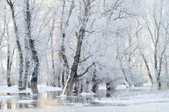 Ландшафт зимы стоковые фотографии rf