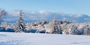 Ландшафт зимы Стоковые Изображения RF