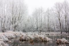 Ландшафт зимы Стоковая Фотография