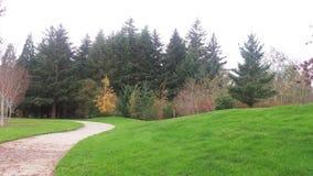 Ландшафт и лес Стоковое Изображение RF