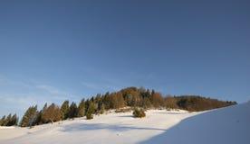 Ландшафт и ели зимы Стоковое Изображение