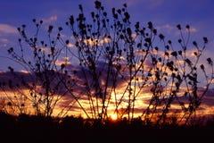 Ландшафт Иллинойс захода солнца прерии Стоковые Изображения