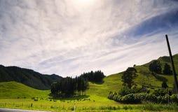 Ландшафт и коровы Новой Зеландии Стоковые Фото