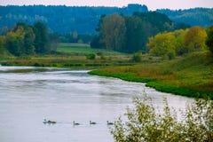 Ландшафт и птицы реки стоковые фотографии rf