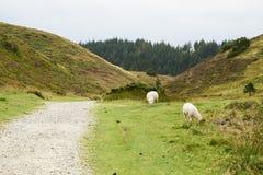 Ландшафт и симпатичная природа в холмах Rebild в Дании Стоковое Изображение RF