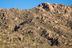 Ландшафт кактуса Стоковое фото RF