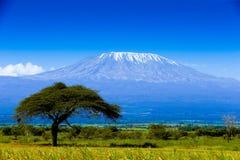Ландшафт Килиманджаро Стоковое Изображение
