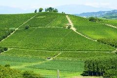 Ландшафт лета в Langhe (Италия) Стоковое Изображение
