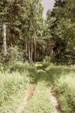 Ландшафт ЛЕТА Лес и поле на солнечный день Стоковые Фото