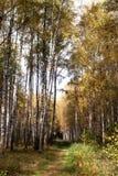 Ландшафт ЛЕТА Лес и поле на солнечный день Стоковые Изображения RF