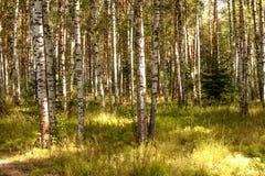Ландшафт ЛЕТА Лес и поле на солнечный день Стоковые Изображения
