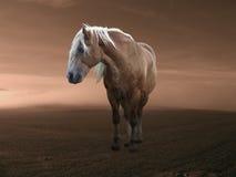 ландшафт лошади Стоковое Изображение RF