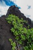 Ландшафт Мауи Гаваи Стоковое фото RF
