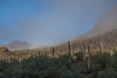 Ландшафт национального парка Saguaro в тумане Стоковые Фото