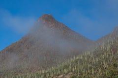 Ландшафт национального парка Saguaro Стоковые Изображения RF