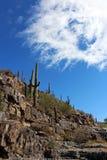 Ландшафт национального парка Saguaro Стоковое Фото