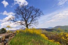 Ландшафт национального парка Shenandoah Стоковые Изображения RF