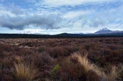 Ландшафт национального парка Tongariro Стоковые Изображения RF