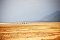 Ландшафт низменности Танзании Стоковое Фото