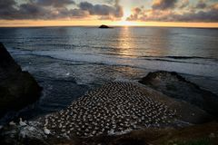 Ландшафт Новая Зеландия - пляж Muriwai во время захода солнца Стоковая Фотография RF