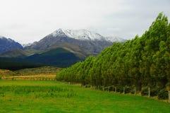Ландшафт Новой Зеландии Стоковое Изображение RF
